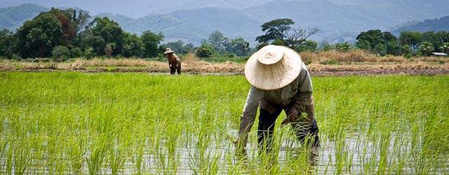 hukum minimum liebig pertanian