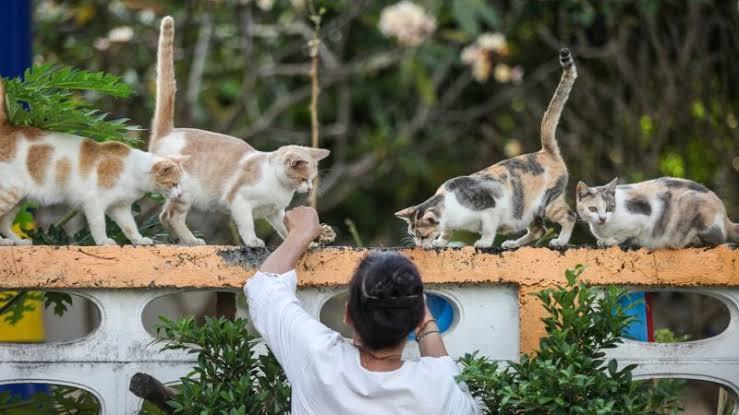 memelihara kucing kampung itu mudah karena selain penurut juga tidak manja