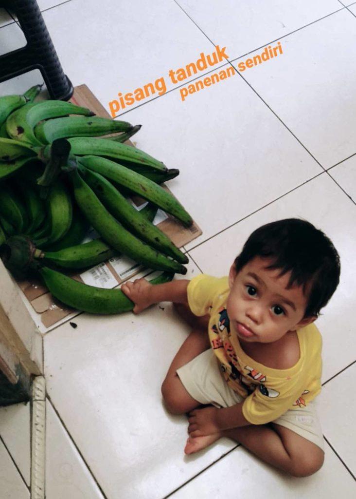 pisang tanduk hasil panen kebun sendiri ini tidak kami jual karena favorit kami banget