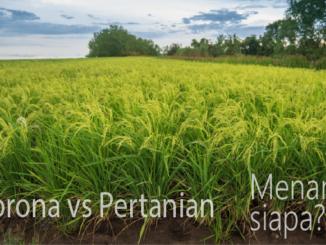 Dampak corona ke pertanian di sekitar kita tidak selalu merugikan, misalnya masyarakat menjadi lebih banyak belanja beras hingga sayur mayur