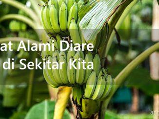 pisang kaya serat dan pektin yang ampuh sebagai salah satu macam obat alami diare selain pucuk daun jambu dan oralit